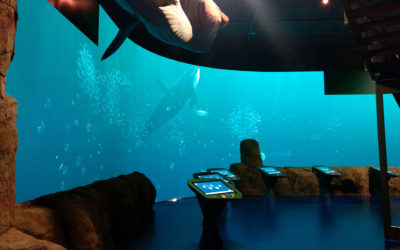The North Sea Oceanarium